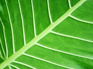 Prodotti ecologici per la casa