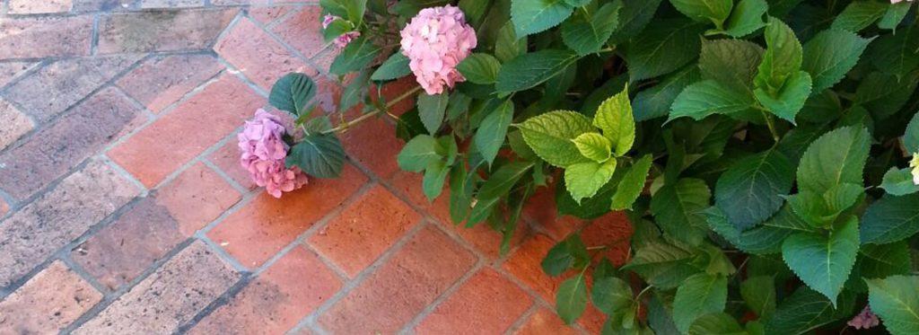 Fleckige Außenflächen durch Laubablagerungen und Blumenblätter? Hier kommt das Gegenmittel!