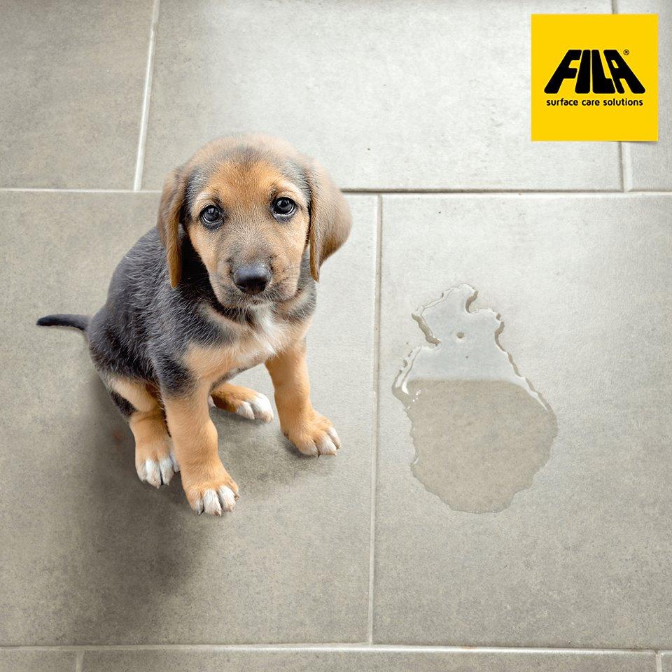 Reiniger Hundepippi